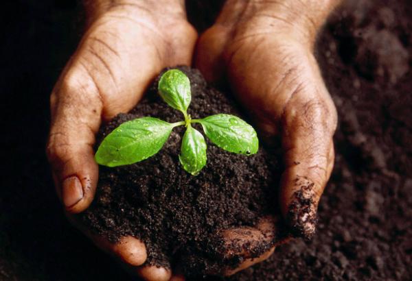 organic soil, growing, cannabis, bloom city club, ann arbor